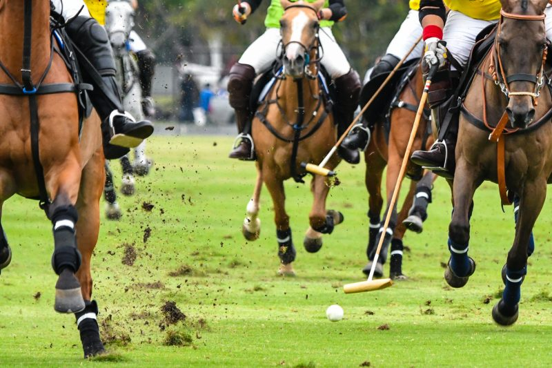 polo ponies are actually horses